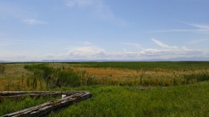 view of the marsh towards the water with the island mountains in the background.....